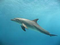 Floating von Gesellschaft zur Rettung der Delphine e.V.